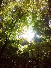 Выездной интенсив на Светёлке «Путешествие за внутренней силой»
